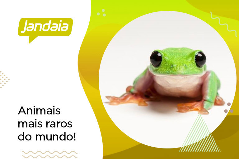 Animais mais raros do mundo